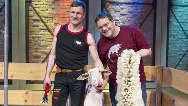 Elton, der Schafscherer Reinhard Blümelhuber und das gerade geschorene Merinoschaf. Da kommt ganz schön viel und feine Wolle zusammen. | Rechte: ZDF/Ralf Wilschewski