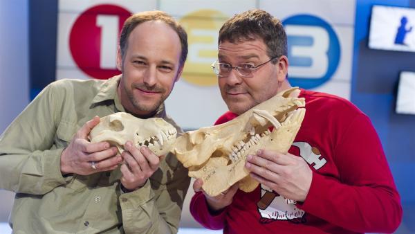 Elton und der NABU Wolfsexperte Markus Bathen. Wolfsschädel gegen den Schädel eines Ebers... | Rechte: ZDF/Ralf Wilschewski
