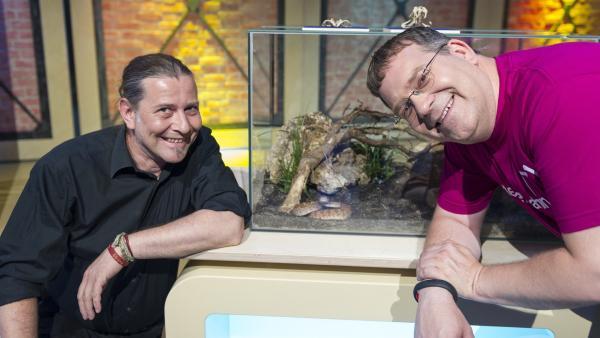 Dr. Markus Baur von der Reptilienauffangstation München und Elton (re.) sind entspannt, da die Klapperschlange sicher im Terrarium verschlossen ist. | Rechte: ZDF/Ralf Wilschewski
