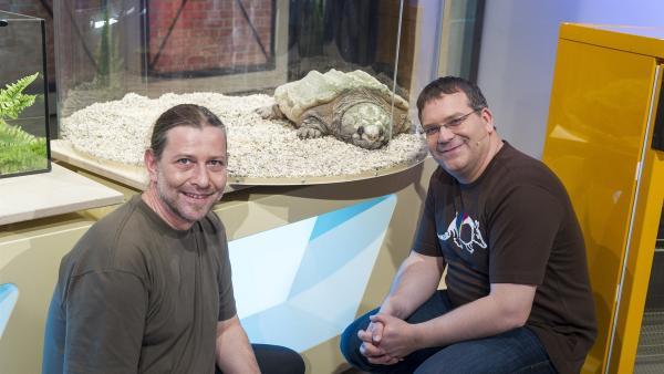 Vorsicht: bissig! Dr. Markus Baur von der Reptilienauffangstation in München berichtet Elton von der Geierschildkröte.  | Rechte: ZDF und Ralf Wilschewski