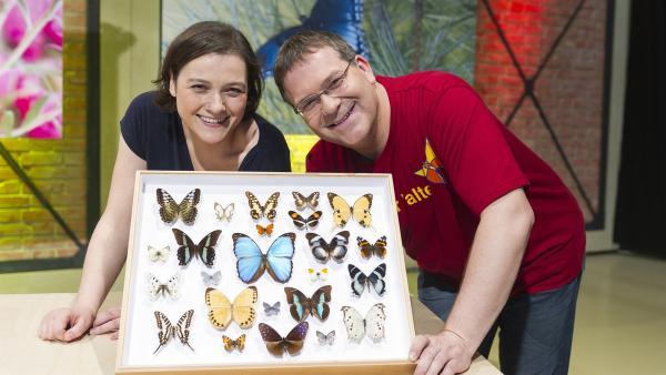 Schmetterlingsexpertin Susanne Grube hat Elton einige Schätze mitgebracht. | Rechte: ZDF und Ralf Wilschewski