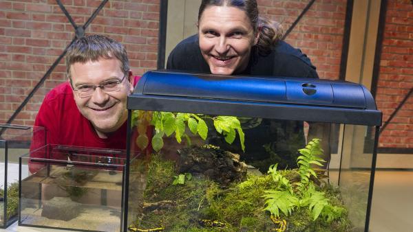 Elton und der Biologe Axel Kwet beobachten Amphibien. | Rechte: ZDF und Ralf Wilschewski