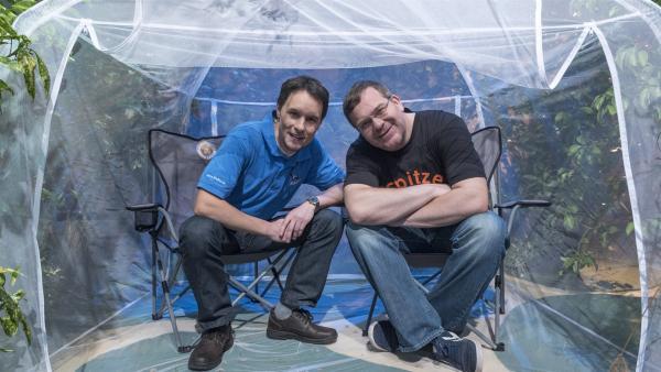 Heute dreht sich alles um das, was pikst und sticht. Unter anderem die Stechmücke, von der Insektenforscher Julian Heiermann Interessantes zu berichten weiß. | Rechte: ZDF/Ralf Wilschewski