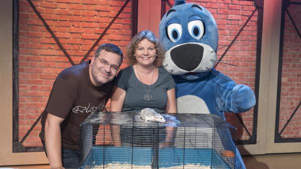 Heute haben kleine Tiere einen großen Auftritt: Im 1, 2 oder 3-Studio ist die Biologin Karin Schneeberger zu Gast, die verschiedene Ratten mitbringt. | Rechte: ZDF/Ralf Wilschewski