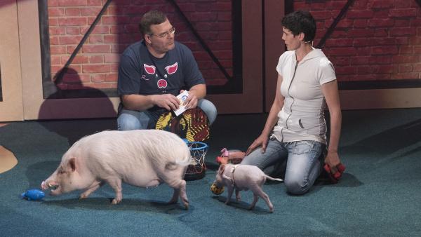 Schweine sind ganz schön schlau. Tiertrainerin Nicolle Müller erzählt Elton allerlei Faszinierendes und Verblüffendes aus der Welt der Schweine.       | Rechte: ZDF/Ralf Wilschewski