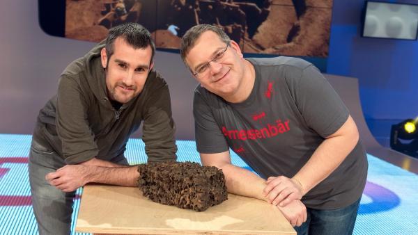 Ameisen - das ist das Thema der heutigen Sendung. Wie klappt die Organisation des Ameisenalltags? Warum ertrinken Feuerameisen nicht, wenn ihr Lebensraum überschwemmt wird? Und wofür brauchen die Blattschneideameisen die ganzen Blätter? Zu Gast im Studio ist der Ameisenforscher Dr. Christoph von Beeren, der eine Ameisenart entdeckt hat, die einen Käfer huckepack trägt.       | Rechte: ZDF/Ralf Wilschewski