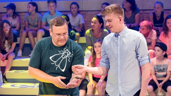 Und die macht auch wirklich nichts? Elton mit einer Riesenheuschrecke auf der Hand.   Rechte: ZDF/Ralf Wilschewski