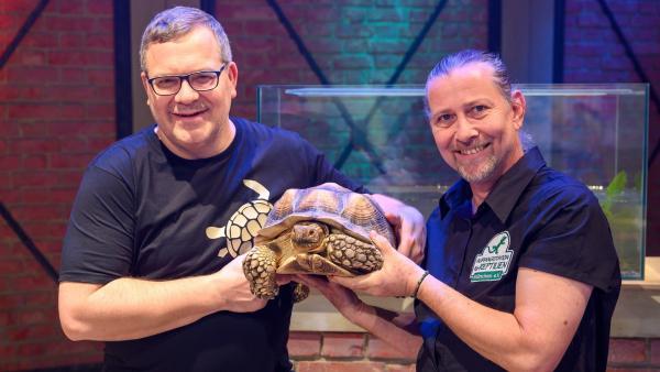 Fachtierarzt und Schildkrötenexperte Dr. Markus Baur ist mit drei Schildkröten zu Gast im Studio und erklärt, wie sich die die Spornschildkröte unsichtbar machen kann und warum eine Schildkröte ohne ihren Panzer nur schwer überleben kann. | Rechte: ZDF/Ralf Wilschewski