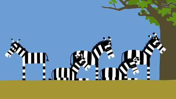 Die anderen Zebras wollen ihre Ruhe haben. | Rechte: KiKA/SWR/Film Bilder/Julia Ocker