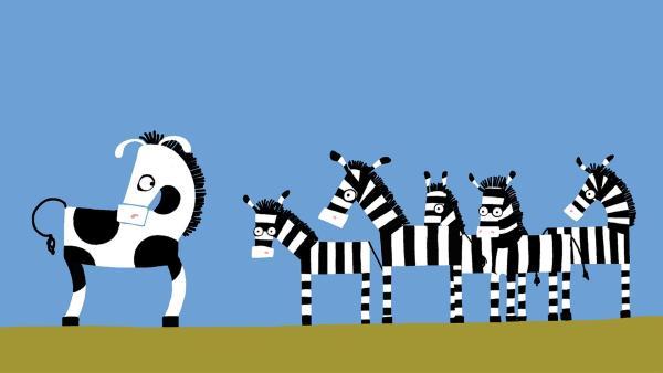 Das Zebra merkt, dass es beobachtet wird. | Rechte: KiKA/SWR/Film Bilder/Julia Ocker
