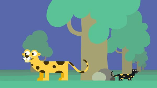 Der Feuersalamander und der Leopard | Rechte: KiKA/SWR/Film Bilder/Julia Ocker
