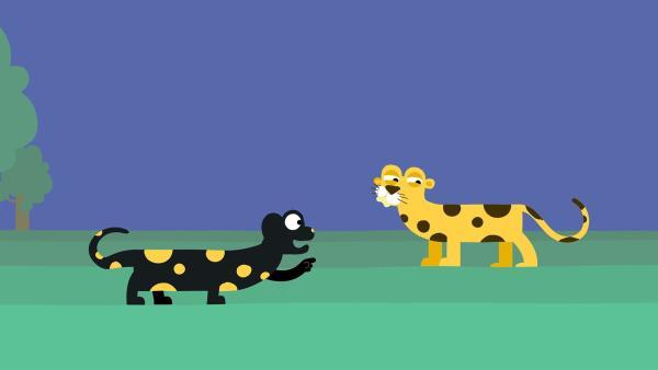 Der Feuersalamander macht den Leoparden auf ihre Ähnlichkeit aufmerksam. | Rechte: KiKA/SWR/Film Bilder/Julia Ocker