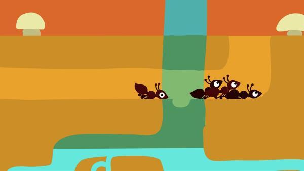 Die anderen Ameisen werden ganz schön durcheinander geschüttelt. | Rechte: KiKA/SWR/Film Bilder/Julia Ocker