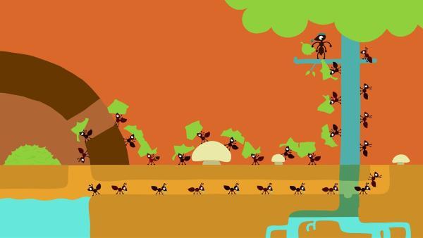 Alle Ameisen haben ihren Platz im Getriebe. | Rechte: KiKA/SWR/Film Bilder/Julia Ocker