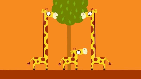 Die kleine Giraffe möchte gerne auch ein paar Blätter abhaben. | Rechte: KiKA/SWR/Film Bilder/Julia Ocker