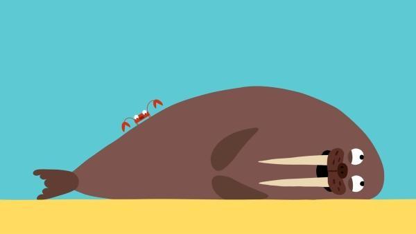 Die Krabbe darf nur dort zwicken, wo es dem Walross gefällt. | Rechte: KiKA/SWR/Film Bilder/Julia Ocker