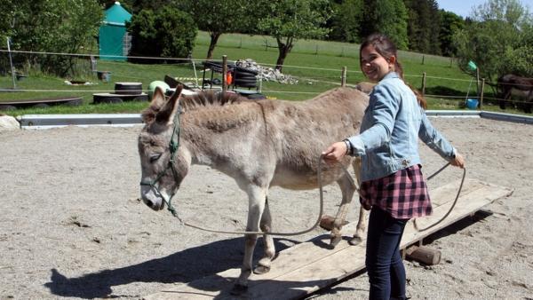 Esel / Esel sind nicht störrisch. Man muss nur wissen, sie zu führen. | Bild: BR / Text und Bild Medienproduktion | Rechte: BR / Text und Bild Medienproduktion