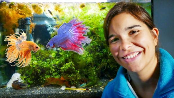 Kampffisch | Anna vor dem Aquarium der Kampffische | Bild: BR | textundbild Medienproduktion Gmbh & Co KG | Rechte: BR | textundbild Medienproduktion Gmbh & Co KG