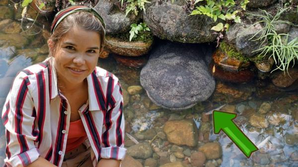 Der glitschige Riesensalamander /  | Bild: BR / text und bild | Rechte: BR / text und bild