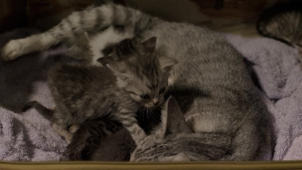 Miau-Katze und ihr Nachwuchs  | Rechte: KiKA/Sinking Ship Entertainment