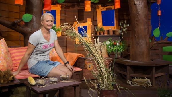 Singa hat verschiedene Getreidesorten im Baumhaus. | Rechte: KiKA/Josefine Liesfeld