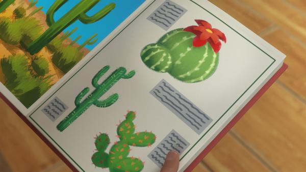 Der Kaktus Florus wächst in der Wüste und blüht nur einmal im Jahr. | Rechte: KiKA/BBC/Boat Rocker Rights Inc. MMXVIII