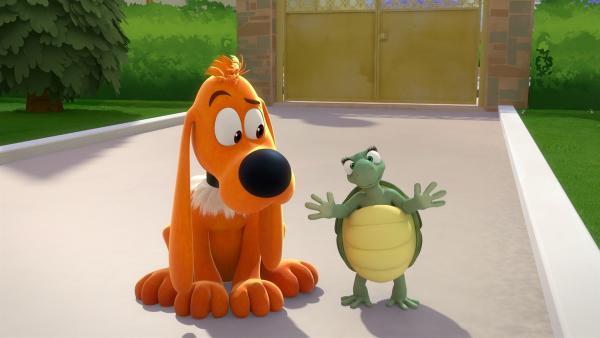 Caroline hätte gerne eine Schildkröten-Freundin.   Rechte: NDR/Studio Boule et Bill