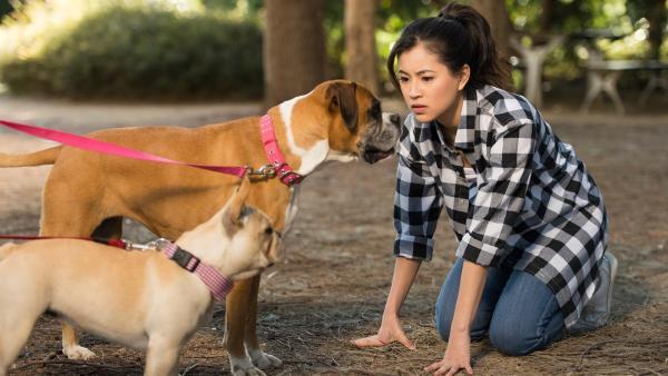 Kyra (Kimie Tsukakoshi) kann es nicht fassen. Sie kann plötzlich die Gedanken der Boxerhündin Doris hören.   Rechte: ZDF/Jonathan M. Shiff Productions/Screen Queensland
