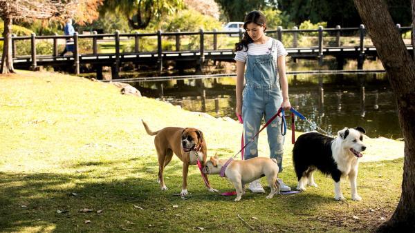 Kyra (Kimie Tsukakoshi) beim Gassi gehen mit den Hunden. Mit Boxerhündin Doris kann sie kommunizieren. | Rechte: ZDF/Jonathan M. Shiff Productions/Screen Queensland