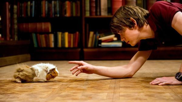 Professor Maxwell ist von Kyra versehentlich in ein Meerschweinchen verwandelt worden. Darra (Julian Cullen) versucht, das Meerschweinchen einzufangen, das munter durch die Bibliothek streunt. | Rechte: ZDF/Jonathan M. Shiff Productions/Screen Queensland