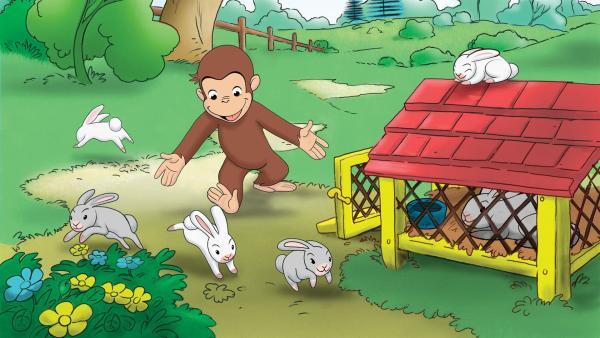 Coco, der neugierige Affe, erlebt jeden Tag ein neues Abenteuer. Eigentlich wollte Coco die Kaninchen von  Bill nur mal streicheln. Doch dabei sind sie ihm aus dem Stall entwischt. Nun muss er sie schnell wieder einfangen. | Rechte: ZDF/NBC Universal