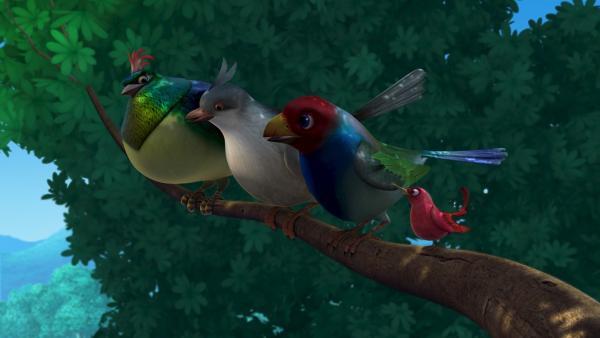 Die drei großen Vögel sind von Darsis Abenteuern beeindruckt. Also doch: Klein, aber oho!   Rechte: ZDF/DQ Entertainment