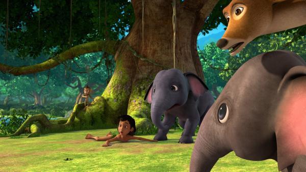 Mogli erklärt sich bereit, für einen Tag auf die Dschungeltierkinder aufzupassen. Das ist leichter gesagt als getan, denn die Rasselbande - das Äffchen Trikki, die beiden Elefantenkinder Appu und Hita sowie Chuchip, der kleine Hirsch - verübt lieber Streiche, als auf Mogli zu hören. | Rechte: ZDF/2009(c) DQ Entertainment