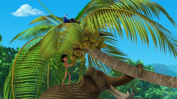 Hathi hilft Mogli eine Kokosnuss zu ernten. Dafür biegt der Elefant den Palmenstamm nach unten. Pula, der Pfau, der oben unbemerkt in der Palmenkrone sitzt, wird gleich aus dem Baum katapultiert werden und weit und schnell durch die Luft fliegen. | Rechte: ZDF/2009(c) DQ Entertainment
