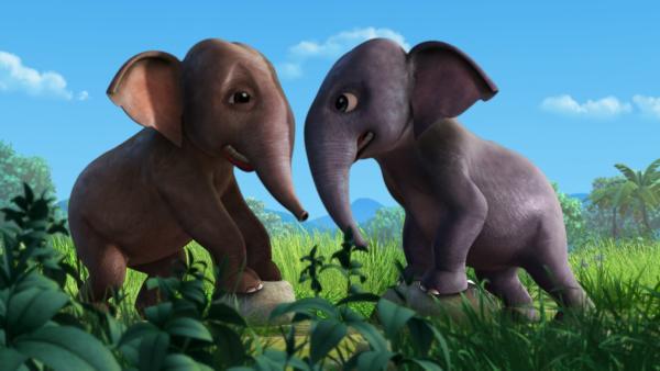 Die beiden Elefantenkinder Hita (re.) und Appu (li.) rangeln um die Wette. Als Hita ihren Bruder auslacht, läuft der beleidigt davon. | Rechte: ZDF/DQ Entertainment