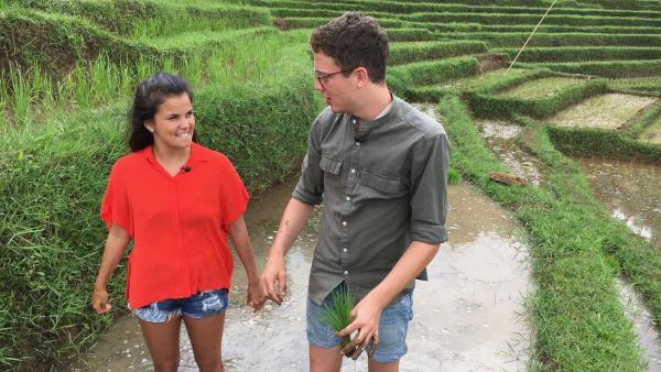Auf den Reisterrassen helfen Louisa und Philipp einem Bauern, die kleinen Reispflanzen einzusetzen. | Rechte: ZDF/Swantje Cichowlas