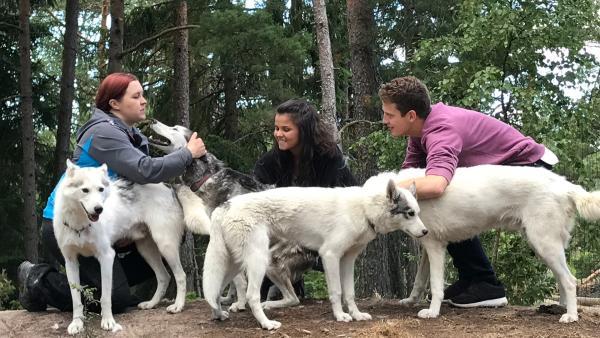 Louisa und Philipp besuchen im Südwesten Finnlands eine Huskyfarm. Hanne zeigt ihnen, auf was man achten muss, wenn man mit ihnen ein Rennen fährt. | Rechte: ZDF/Bettina Herzer