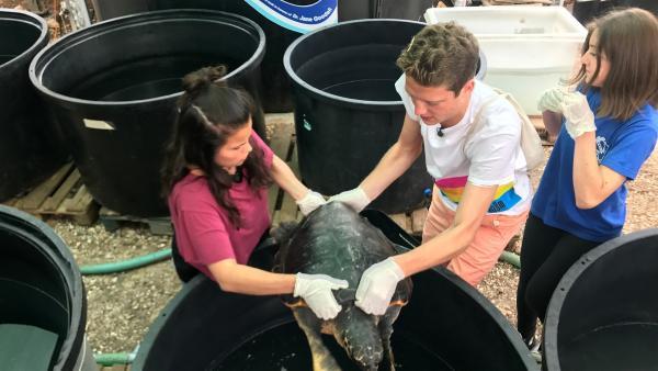 Louisa und Philipp besuchen in Griechenland eine Auffangstation für verletzte Meeresschildkröten. Natürlich helfen die beiden mit, die Tiere zu pflegen. | Rechte: ZDF/Georg Bussek