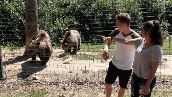 Louisa und Philipp besuchen in Rumänien ein Bärenreservat. Dort werden kranke Bären gepflegt. | Rechte: ZDF/Georg Bussek