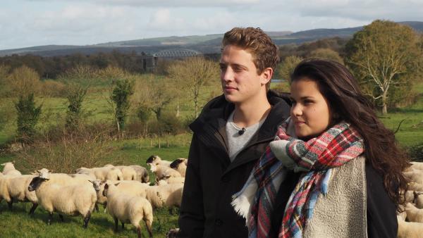 Wie treibt man eine Schafherde zusammen? Das lernen Philipp und Louisa in Irland von einem Mädchen, das mit seiner Familie mehr als 300 Schafe besitzt.   Rechte: ZDF/Bettina Herzer