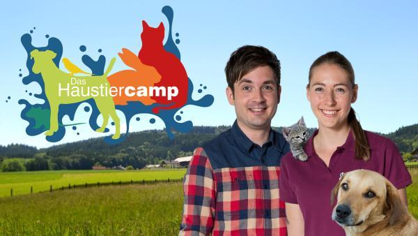 Das Haustiercamp auf tivi.de | Rechte: ZDF