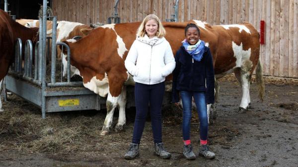 Josie und Charlotte stehen mutig vor den Rindern. | Rechte: ZDF