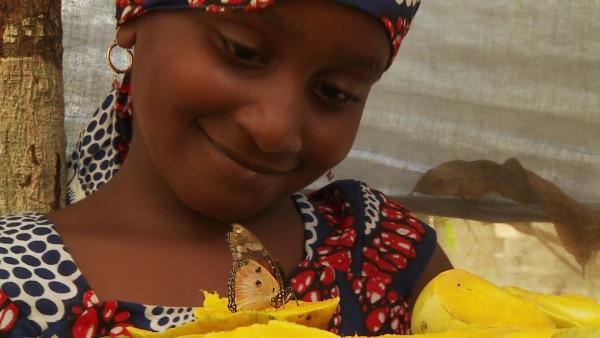 Mein Burder und Ich auf Sansibar: Leckere Muscheln und bunte Falter | Rechte: SWR