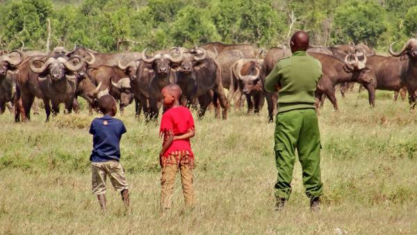 Büffel können ganz schön gefährlich sein. Emily und John verbringen die dreiwöchigen Ferien bei ihrem Papa im Tierreservat. Die Geschwister möchten auch einmal Wildhüter werden, wie ihr Vater. | Rechte: SWR/FF-movie.tv Film- und Fernsehproduktion