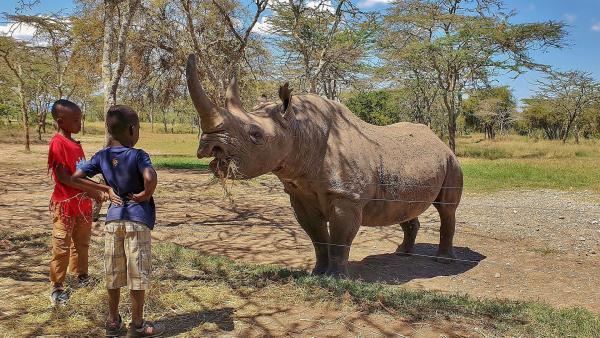 Emily und John treffen das Nashorn Baraka. Es ist blind und muss deshalb täglich gefüttert werden. | Rechte: SWR/FF-movie.tv Film- und Fernsehproduktion