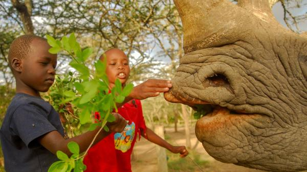 Baraka ist ein Spitzmaulnashorn - ganz einfach an seiner spitzen Lippe zu erkennen. | Rechte: SWR/FF-movie.tv Film- und Fernsehproduktion