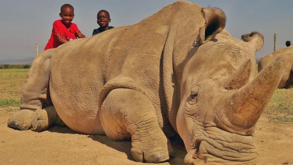 Najin und Fatu sind die zwei letzten Nördlichen Breitmaulnashörner der Erde. | Rechte: SWR/FF-movie.tv Film- und Fernsehproduktion