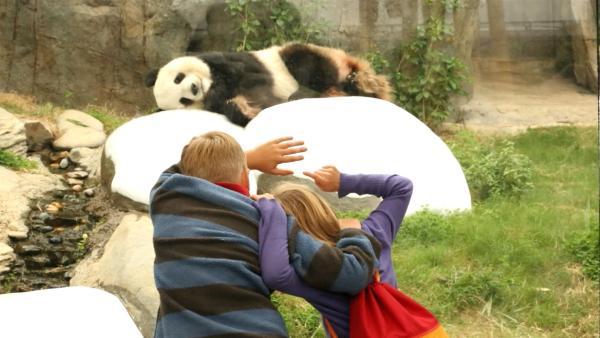 Jacob und Josefine sehen den Panda. | Rechte: SWR/Tellux Film