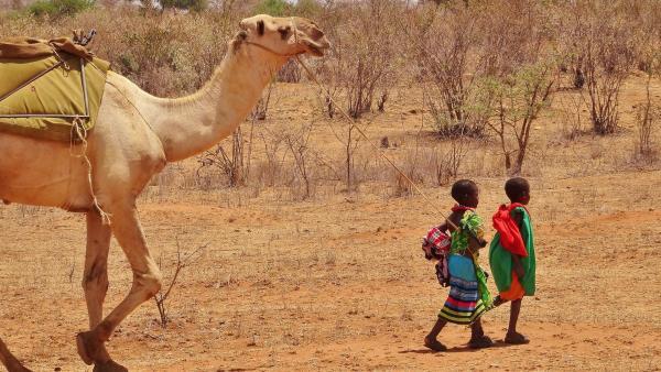 Lolulu und Malalua führen die Karawane an. | Rechte: SWR/Frank Feustle