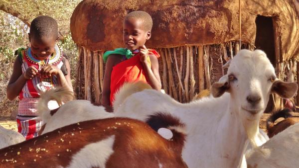 Lolulu und Malalua müssen heute Ziegen hüten. | Rechte: SWR/Frank Feustle